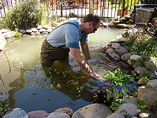 cleaning pond