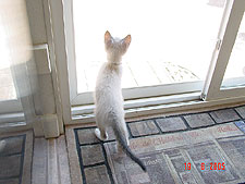 Lily looking outside.