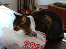 Allie trying to get into a Target bag.