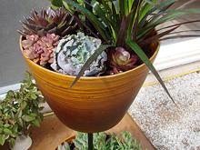 Double-pot plant stand with succulents.