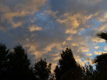 pretty evening skies from the back yard